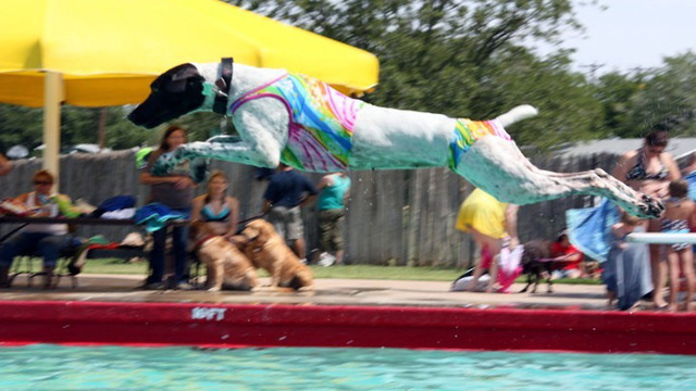 Parks and Recreatio Hosting Annual K-9 SplashFest Sunday Afternoon at Montelongo Pool