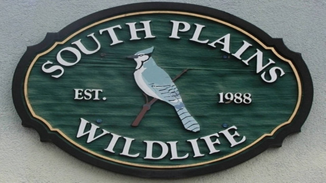 South Plains Wildlife Rehabilitation Center Hosting Holiday Open House Saturday