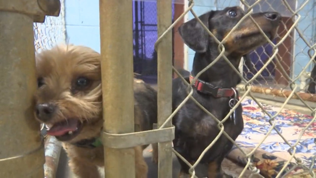 Pets evacuated from Florida ahead of Hurricane Irma