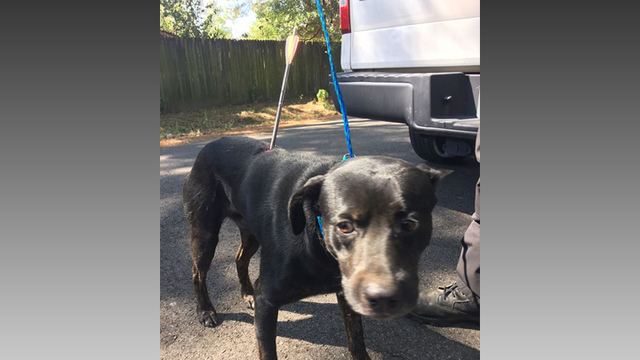 Longview police investigating after dog shot with arrow