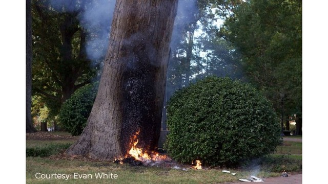 'Somebody naked' blew up a tree — information released from 911 audio in UNC detonation
