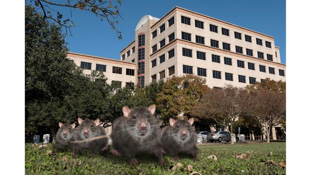 Texas health regulators overrun by