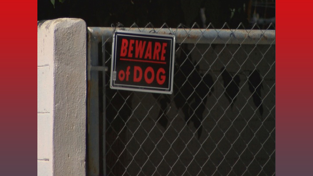 Two women and toddler attacked by dogs in Slaton, one with severe injuries