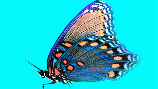 9th Annual Butterfly Release at the Lubbock GAC on Saturday, June 16