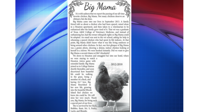 Obituary for family chicken goes viral