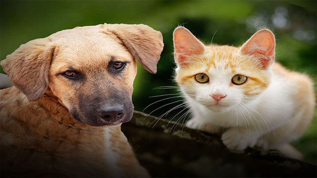 Study: How you love people reflects on how you love pets