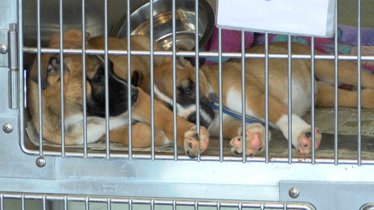 KLBK and Lubbock Animal Services Team Up for 2018 Adopt-A-Thon
