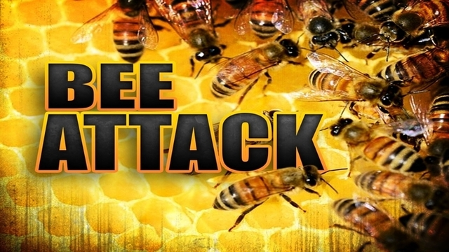 Hobbs Fire Department responds to bee attack on local residents Friday