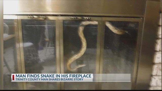 East Texas man finds snake in his fireplace