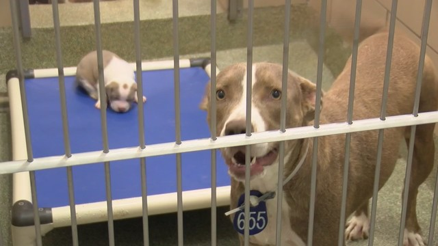 lubbock dog adoption