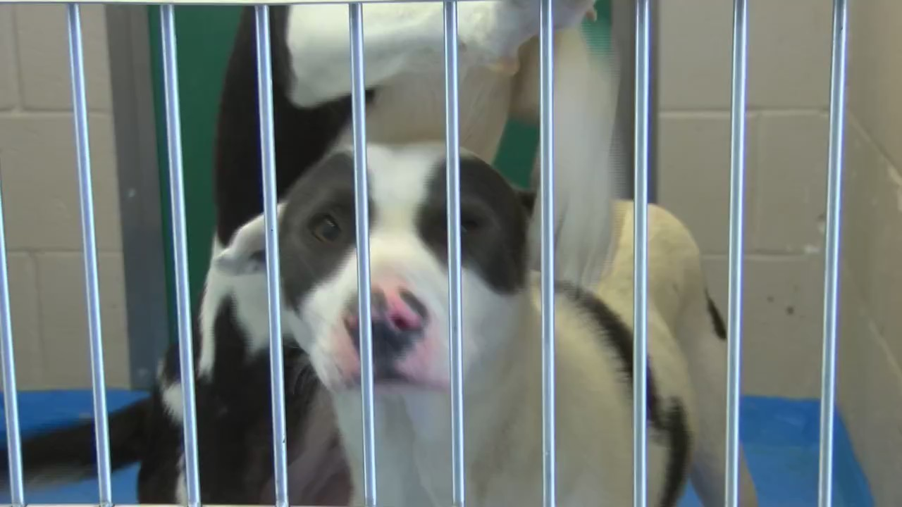 Lubbock Animal Services Has Nearly 700 Animals Up For Adoption
